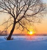 Winter sunrise — Stock Photo