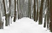 Parco in inverno — Foto Stock