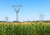 Electric power lines over corn field — Stock Photo