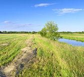Haymaking — Foto Stock