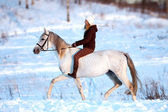 Winter riding — Foto de Stock