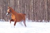 Don horse — Stock Photo