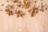 Dried flowers St. John's wort — Stock Photo