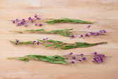 Willow-herb — Stock Photo