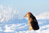 Dog portrait — Foto de Stock