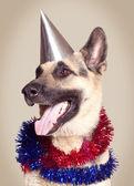 Psa wilczura — Zdjęcie stockowe