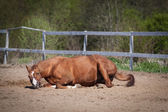 Grappige paard — Stockfoto