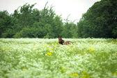 Lonely horse — Стоковое фото