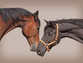Two horses — Stock Photo