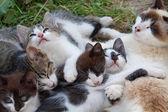 Small kittens — Stock Photo