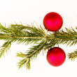 Bauble fir — Stock Photo