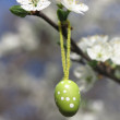 Easter Tree egg — Stock Photo