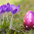 Crocus with easter eggs on meadow — Stock Photo