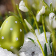 Easter egg meadow snowdrop - Stock Photo