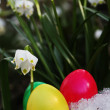 Easter egg meadow snowdrop — Stock Photo