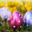Crocus with easter eggs on meadow — Stockfoto