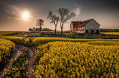 Devastated farm with hives on canola field — Stock Photo