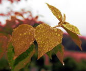 Vintage leaf with droplets — Stock Photo