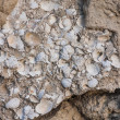 Limestone,  a sedimentary rock from paleogene — Stock Photo