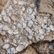 Stock Photo: Limestone, sedimentary rock from paleogene