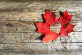 Maple-Leaf to cut the heart — Stock Photo