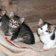 Royalty-Free Stock Photo: Three little kittens sitting on the carpet