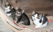 Three little kittens sitting on the carpet — Stock Photo
