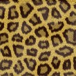 texture of a short sand color leopard fur — Stock Photo
