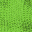 Iguana skin pattern — Stock Photo