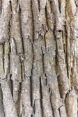 Bark of oak. Seamless Tileable Texture — Stock Photo