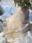 Winter in garden — Stock Photo