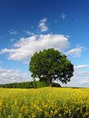 Single tree on rapeseed field — Stock Photo