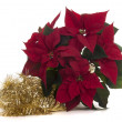 Poinsettia — Stock Photo #37577563