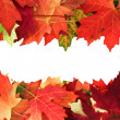 Fall border — Stock Photo
