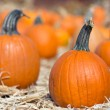 Pumpkin patch — Stock Photo #13539650