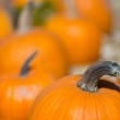 Pumpkin patch — Stock Photo #13539789