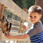 Goat feeding — Stock Photo #13679411