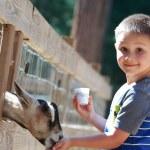 Goat feeding — Stock Photo #13679416