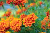 Flowers — Foto Stock