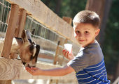 Goat feeding — Stock Photo