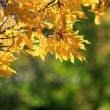 Autumn colors — Stockfoto