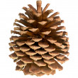 Royalty-Free Stock Photo: Pine cone