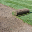 Stock Photo: Rolled sod