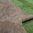 Rolled sod — Stock Photo