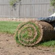 Foto Stock: Rolled sod