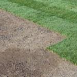 New lawn — Zdjęcie stockowe