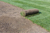 Rolled sod — Stockfoto