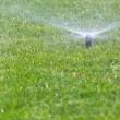 Sprinkler watering grass — Stock Photo #39328603