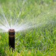 Sprinkler watering grass — 图库照片