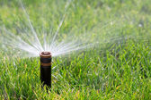 Sprinkler watering grass — Stock Photo